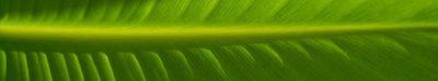 Europe Ecologie Les Verts Aquitaine